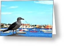 Seagull In Boston Harbor Greeting Card