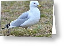 Seagull In Field Greeting Card