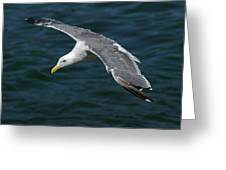 Seagull  In Flight Greeting Card