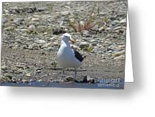 Seagull In Patagonia Greeting Card