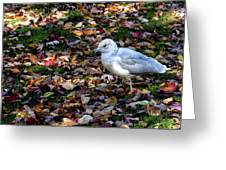 Seagull In The Fallen Leaves Greeting Card