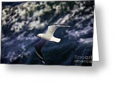 Seagull In Wake Greeting Card