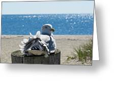 Seagull In Wind Greeting Card