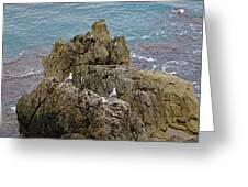 Seagull Island On Cefalu In Sicily  Greeting Card