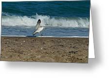 Seagull Landing Greeting Card