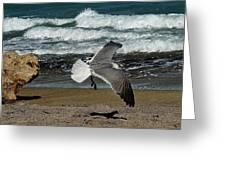 Seagull Landing Hutchinson Island, Fl Greeting Card