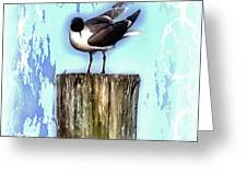 Seagull - Laughing Gull Pop Art  Greeting Card