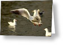Seagull Manoeuvers Greeting Card