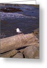 King Of The Seagulls Greeting Card