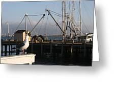 Seagull Morro Bay California Greeting Card