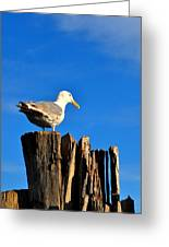 Seagull On A Dock 2 Greeting Card