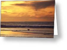 Seagull On A Sandbar Greeting Card