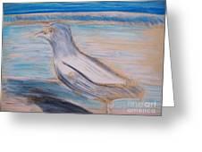 Seagull  On Seashore Greeting Card