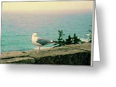 Seagull On Stone Wall Greeting Card