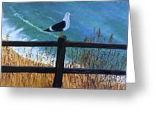 Seagull On The Fence Greeting Card