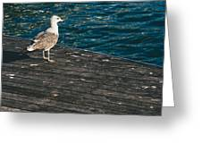 Seagull On The Pier Greeting Card