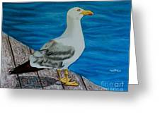 Seagull On The Shore - Gaviota En La Costa Greeting Card