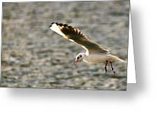 Seagull Over Water Greeting Card