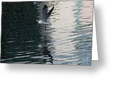 Seagull Reflection Over Blue Bay Greeting Card