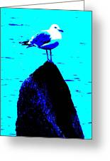 Seagull Scout Greeting Card