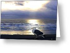 Seagull Sentinel Greeting Card
