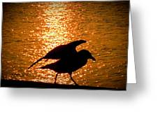 Seagull Silhouette Greeting Card