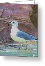 Seagull Strut Greeting Card