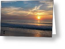 Seagull Sunrise Along The Jersey Shore Greeting Card