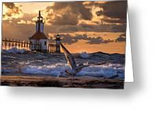 Seagull Takeoff - Tiscornia Beach  Greeting Card