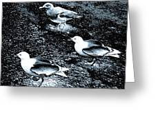 Seagull Trio Greeting Card
