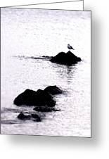 Seagull Waiting Greeting Card