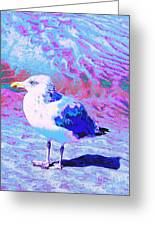Cool And Colorful Gull Greeting Card