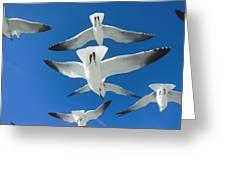 Seagulls #4 Greeting Card