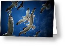 Seagulls Above Greeting Card