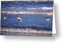 Seagulls Above The Seashore Greeting Card