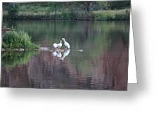 Seagulls At Lake Greeting Card