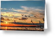 Seagulls At Sunset Greeting Card