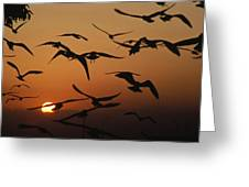 Seagulls In Sunset Greeting Card