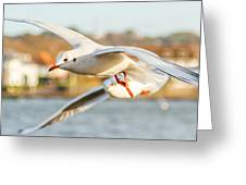 Seagulls In The Air Greeting Card