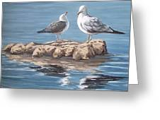 Seagulls In The Sea Greeting Card
