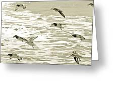 Seagulls Landing Tampa Florida Greeting Card