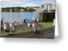 seagulls near a pond in the center of Reykjavik Greeting Card