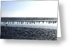 Seagulls On A Sandbar Greeting Card