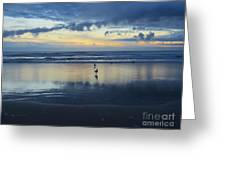 Seagulls On Beach At Sunset Greeting Card