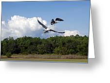 Seagulls Over Marsh Greeting Card