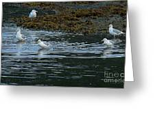 Seagulls-signed-#9360 Greeting Card