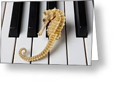 Seahorse On Keys Greeting Card by Garry Gay