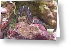 Seahorse1 Greeting Card