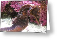Seahorse4 Greeting Card