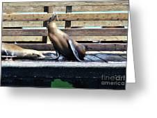 Seal Cheerleader Greeting Card
